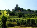 Forget the Beer — Germany is for Wine Lovers