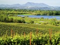 Sonoma County's Best Wineries to Visit, & Why You'll Love Them