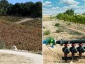 California Water Law Will Affect Vineyard Value