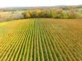 US: Drone Reveals Stressed Vines
