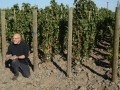 Walla Walla has new wine AVA in Oregon: Rocks District of Milton-Freewater