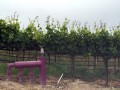 Recycled Water Now an Option for Napa Vineyards