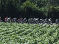French winemaker threats secure Tour de France deal