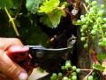 Treasury Wine Estates to sell Australian, US wineries