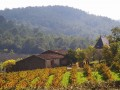 Languedoc, French wines with terroir, character and personality