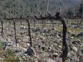Dubourdieu: 'Old vines are not better'