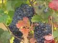 Wine pours millions into Idaho economy
