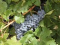 Global wine trade goes under the microscope in new Rabobank report