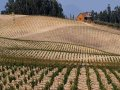 Drought Clouds Future of California Wine Industry