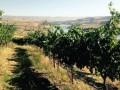 Northwest Grapegrowing Season Powers Up