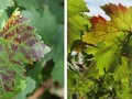 Cal Grants to Benefit Wine Industry