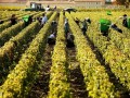 Bordeaux 'returning to favour' among fine wine buyers