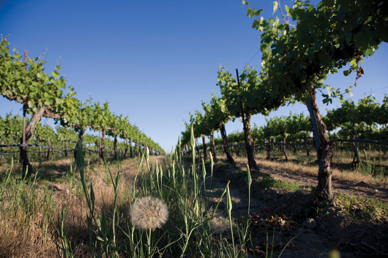 Washington Wine Industry Pursues Ambitious Goals
