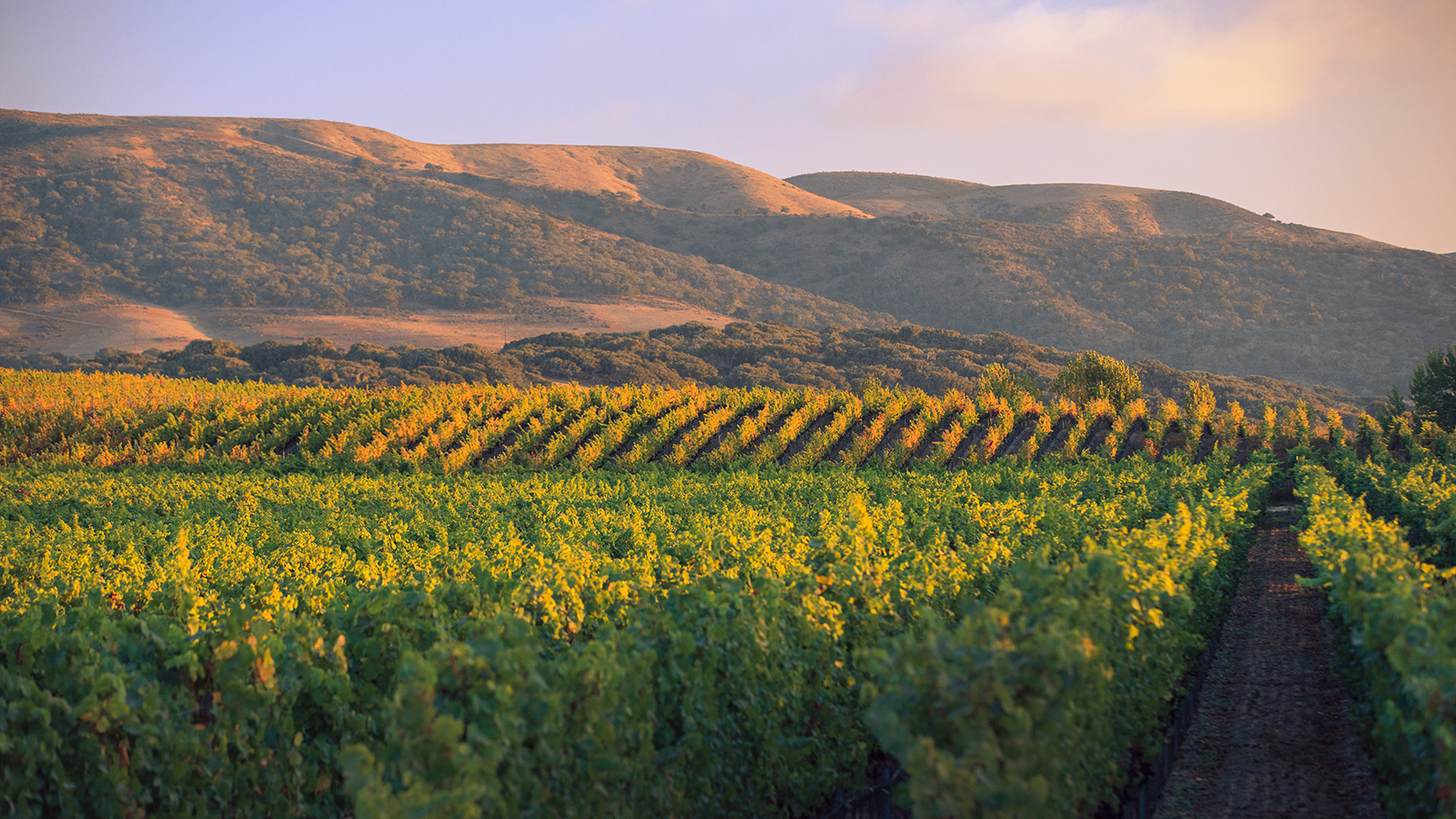 Exclusive: Jackson Family Buys California Pinot Star Brewer-Clifton