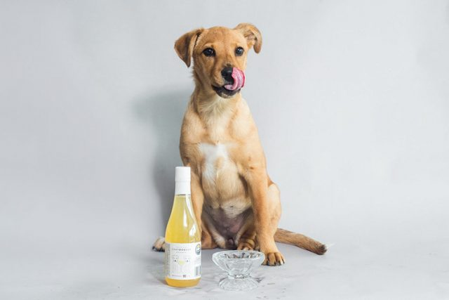 WINE RANGE FOR DOGS LAUNCHED